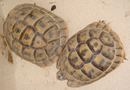 photo_tortues.jpg (8518 octets)
